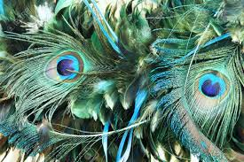 123rf feathers